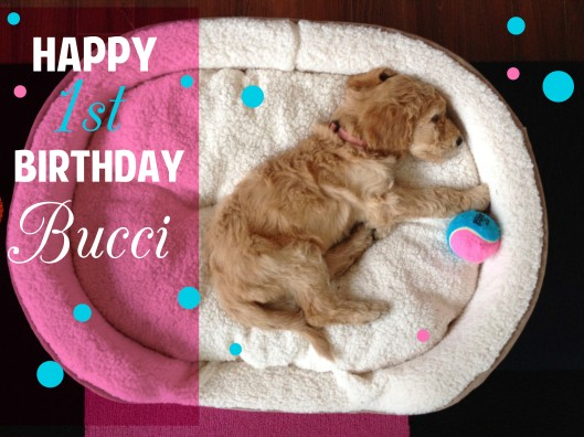 A year ago today our little Bucci was born.  6 weeks later she came home with us and transformed our lives forever.