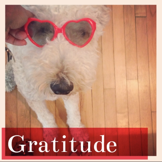 grateful to my friend, Charity D'Amato, who gifted me these little heart shades when celebrating her blog, www.iheartcleveland.com 's 6th birthday last week.